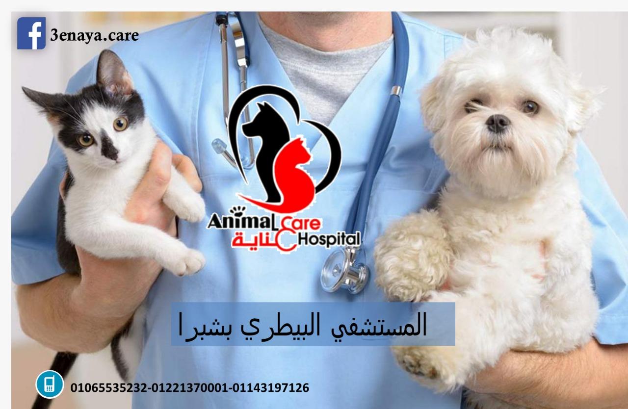 المستشفي البيطري بشبرا