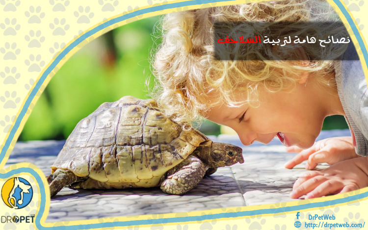ما يجب أن تعرفه عن تربية السلاحف