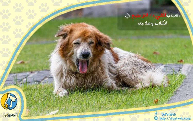 تعرف على أسباب وعلاج القيء  الترجيع  لدى الكلاب