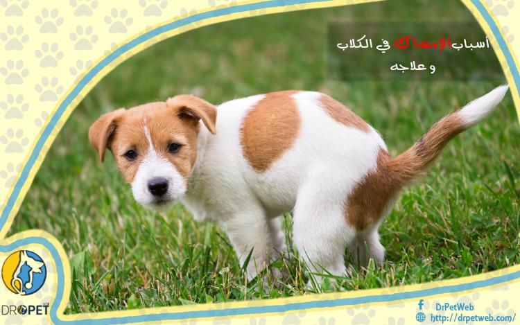 أسباب وعلاج الإمساك لدى الكلاب