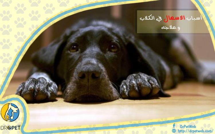 أسباب الإسهال لدى الكلاب وعلاجه
