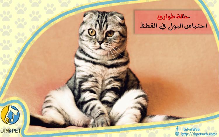 احتباس البول لدى القطط..حالة طارئة تحتاج تدخل سريع