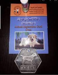 كيفية استخراج ترخيص الكلب وبطاقته