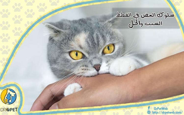 سلوك العض لدى القطط.. الأسباب وكيفية التعامل معه