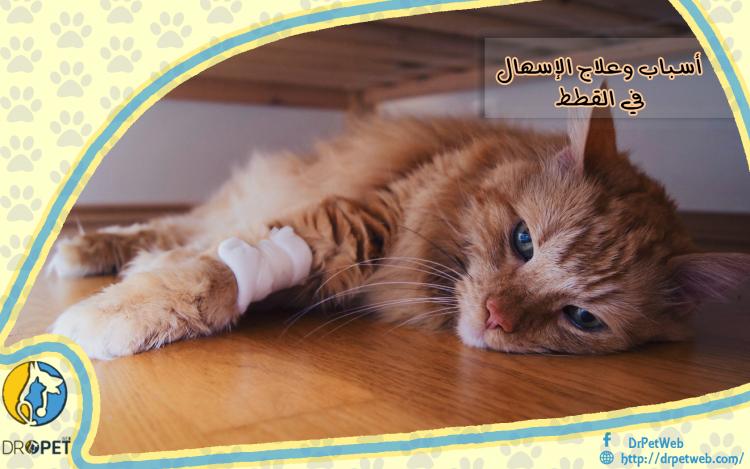تعرف على أسباب وعلاج الإسهال لدى القطط