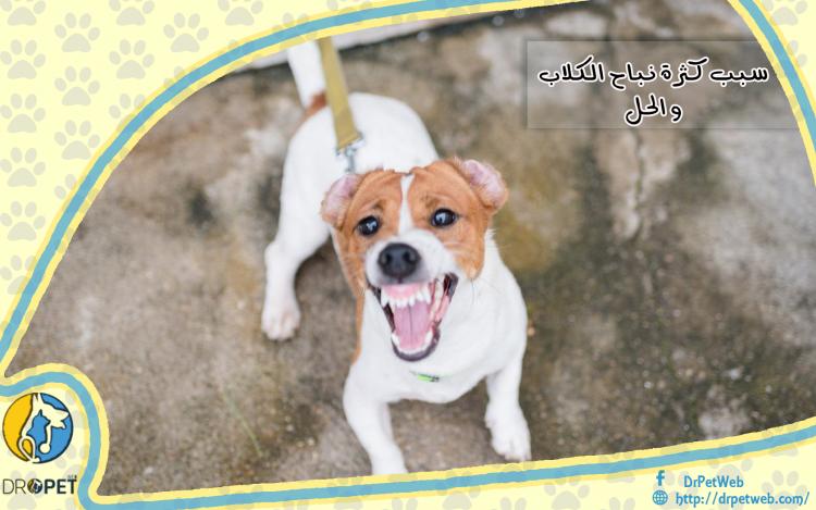 أسباب نباح الكلاب المفرط والتعامل معه