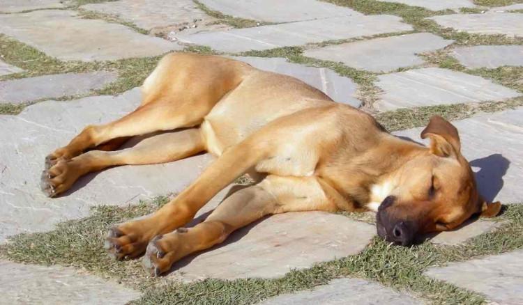 الاحتباس الحرارى لدى الكلاب .. مشكلة تسبب الوفاة