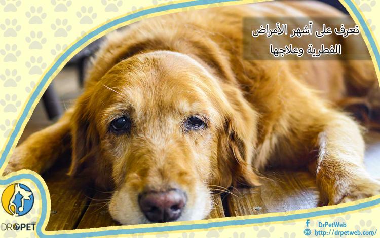 الفطريات فى الكلاب وعلاجها